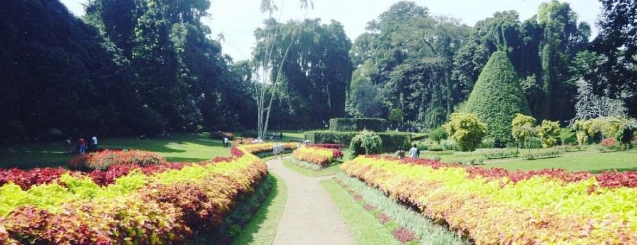 Royal Botanic Garden Peradeniya